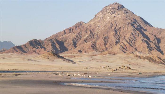 'شاطئ فوشي ' رمال فضية ناعمة ومياه نقية