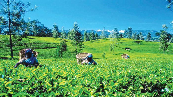 Celebrating International Tea Day