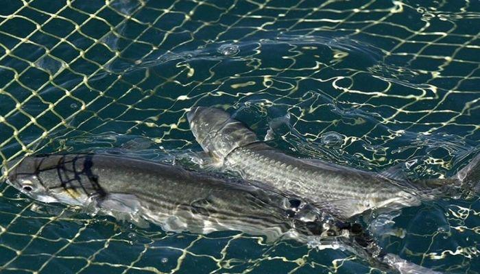 الاتحاد الأوروبي وبريطانيا يتوصلان لاتفاق على حدود قصوى للصيد في مصائد الأسماك المشتركة