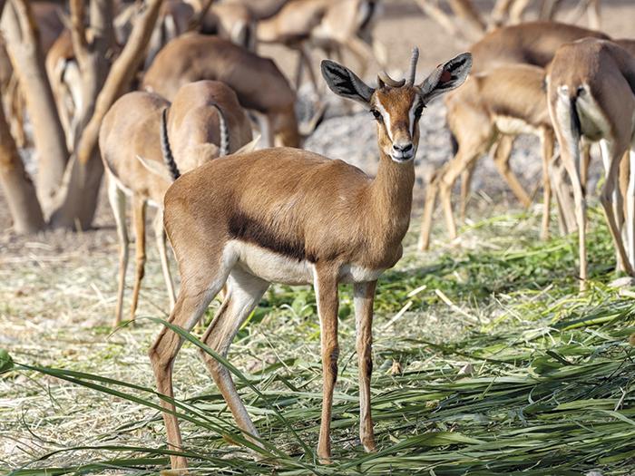 We Love Oman: Unique biodiversity at Al Saleel National Park