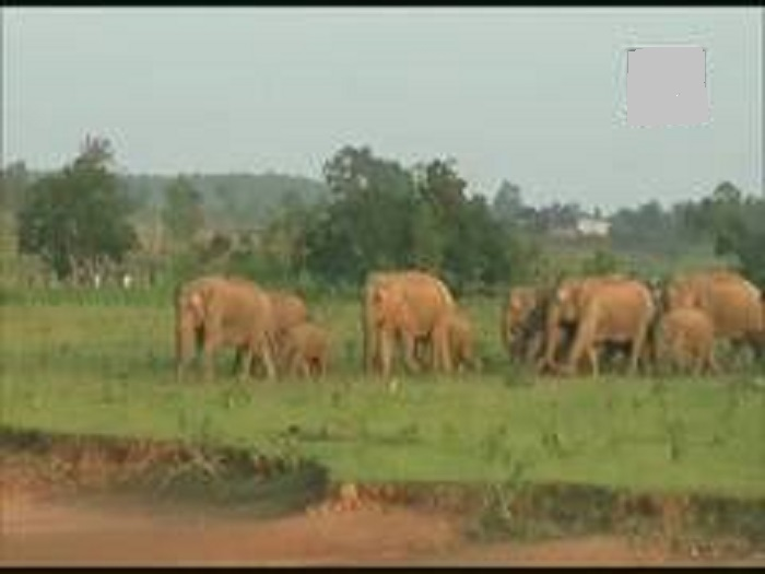 Here's how an elephant's trunk manipulates air to eat, drink