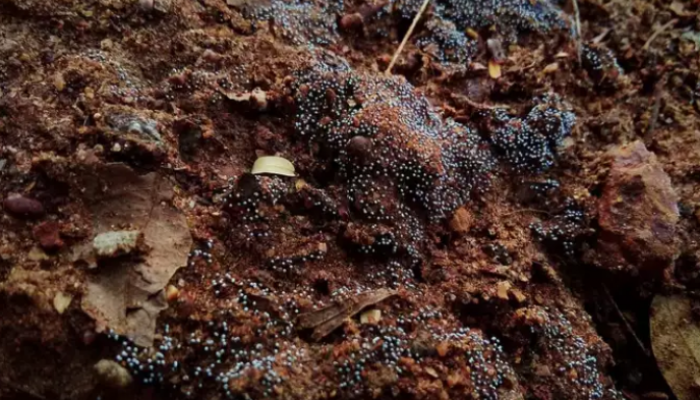COVID, diabetes, low immunity main risk factors of black fungus: Doctors