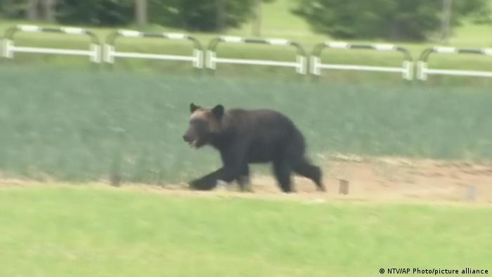 Japan: Wild brown bear injures 4 during rampage in Sapporo