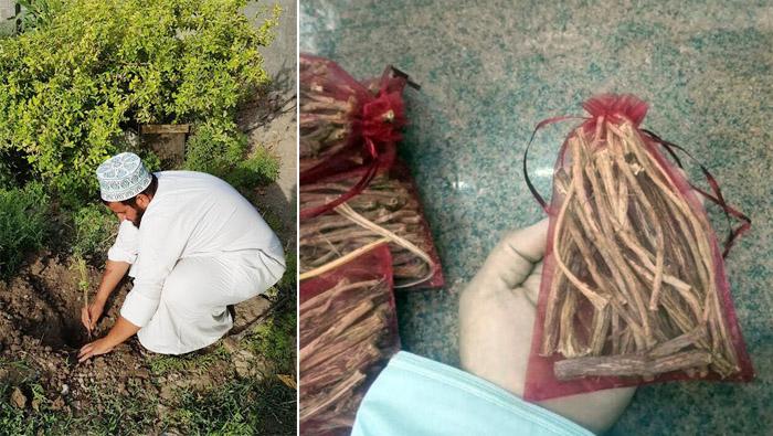 We Love Oman: Manah's rare tree with medicinal properties
