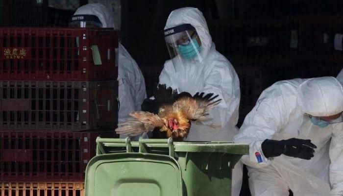 الصين تسجل إصابة بإنفلونزا الطيور