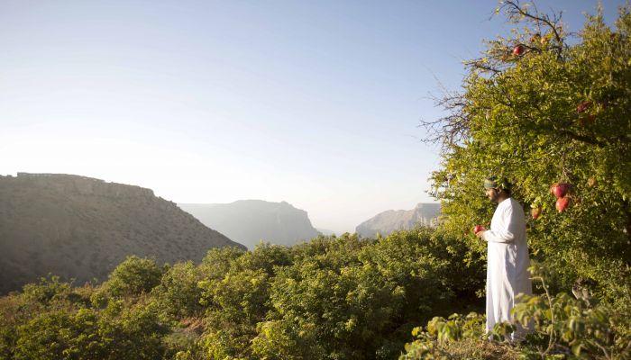 منتجع أنانتارا الجبل الأخضر يحتفل بموسم حصاد الرمان