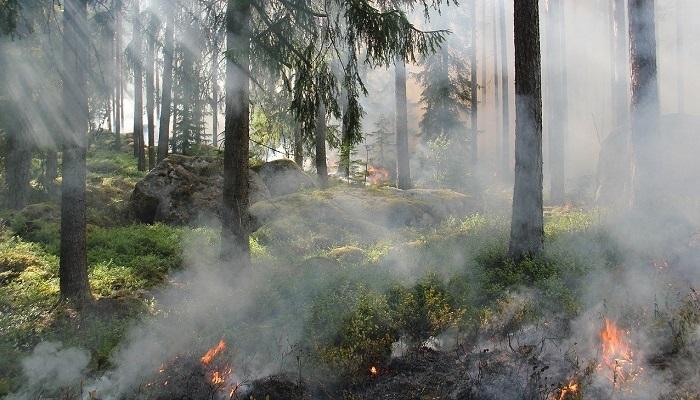 Oman sends condolences to Algeria over forest fires