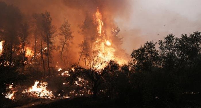 New blaze hits Greece's Evia island
