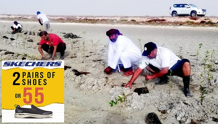 Environment Authority plants 1,200 mangrove saplings in Al Wusta