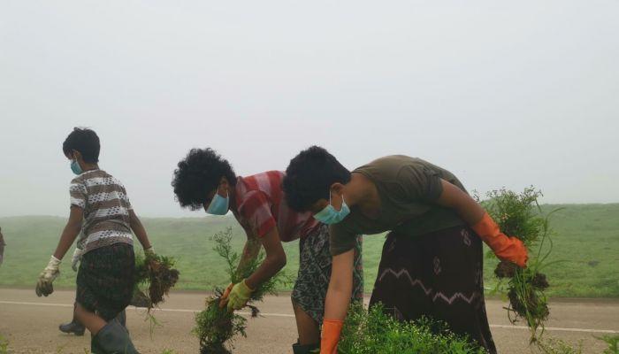 جهود أهلية في ظفار لاجتثاث نبتة الباراثنيوم