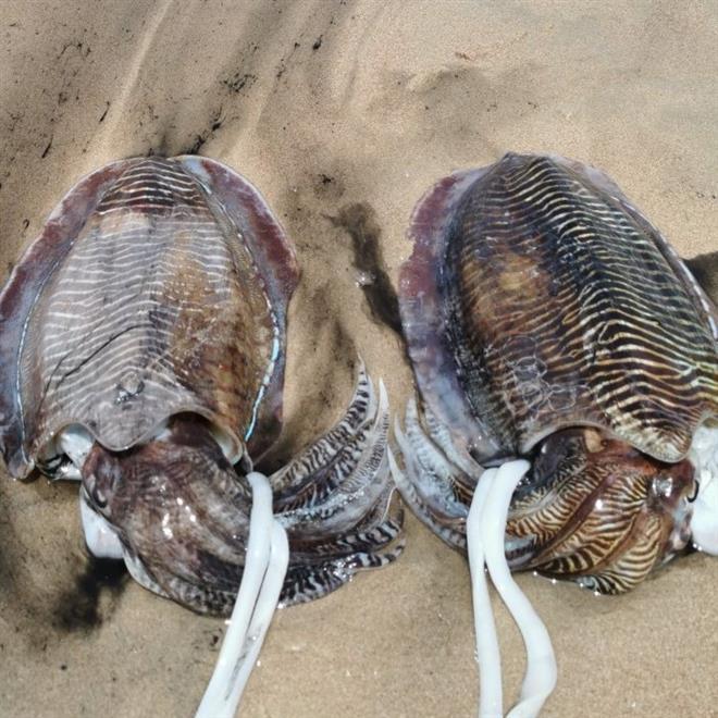 موسم صيد الحبار يُشكل أهمية اقتصادية واجتماعية
