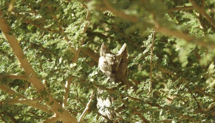 جهودٌ متواصلةٌ لحماية وصون البيئة في محافظة البريمي
