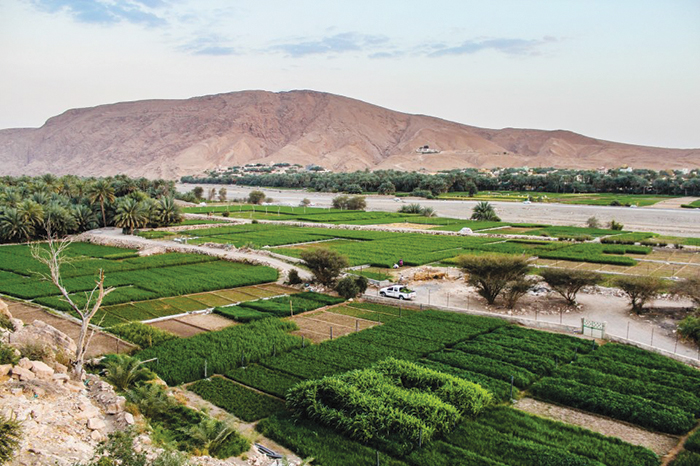 We Love Oman: Natural beauty and heritage of Yanqul