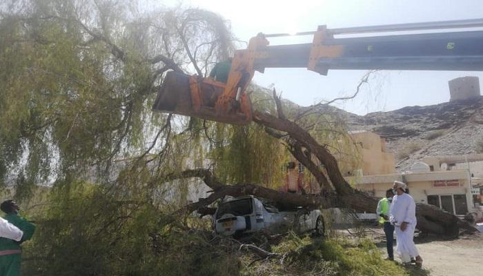 Uprooted 'Ghaf al-Qalaa' tree replanted in Ruwi