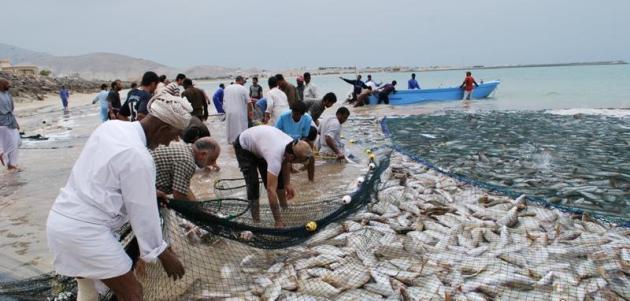 أكثر من 840 ألف طن إنتاج السلطنة من الأسماك في 2020